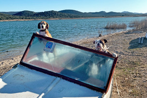 Hunde auf alten Boot in Kroatien