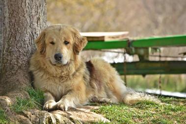 Fluffy, der Dorfsheriff