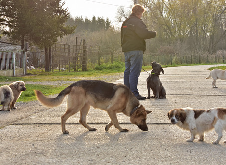 Trolly und die Straßenhunde