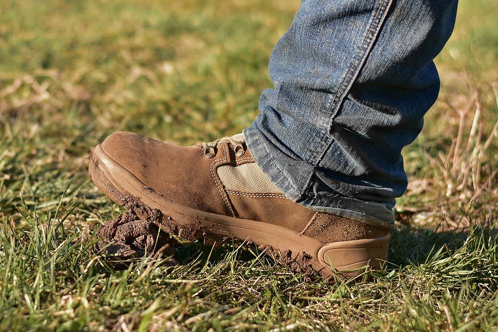 Schuh, der in Hundehaufen tritt