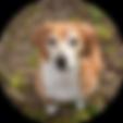 Vandog - Hund - Vierbeiner - Korny