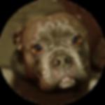 Vandog, Hund, Bulldogge, Trolly, Angsthund