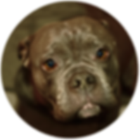 Vandog Trolly - Hund - Vierbeiner