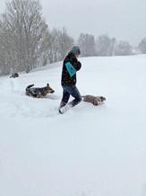 Schneewanderung mit Hunden