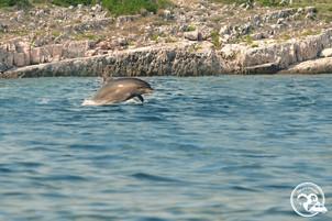 Defin in Sicht Meer Inseln Kroatien