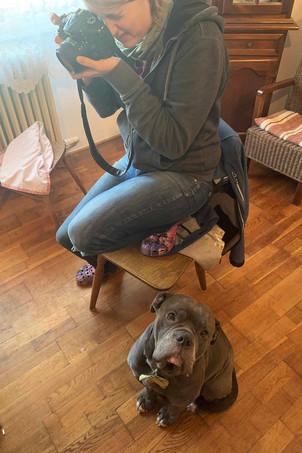 Bulldogge Trolly schaut Jess beim Fotografieren zu
