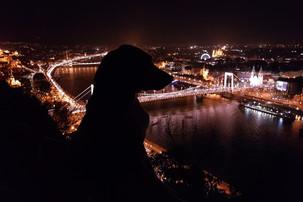 Hund Korny vor der Skyline Budapest bei Nacht
