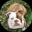 Vandog - Hund - Vierbeiner - Chelly
