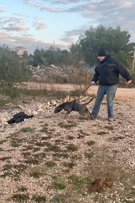 Angsthund Bulldogge schwarze Jacke
