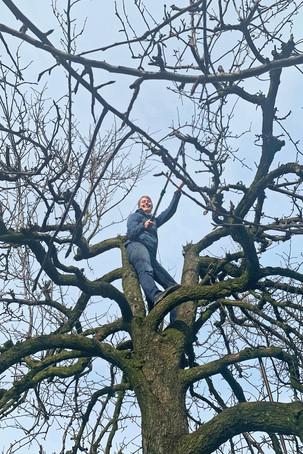 Arbeiten auf den Bäumen für Haussitting in Ungarn