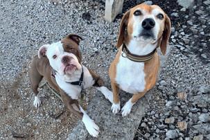 Hunde Korny & Chelly in Römerkastell Kroatien Dalmatien