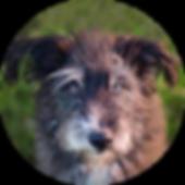 Verstorben - Hund - Vierbeiner - Mázli
