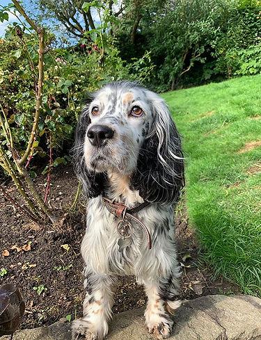 Jasmine 😍😍 #homeboarding #doggydaycare