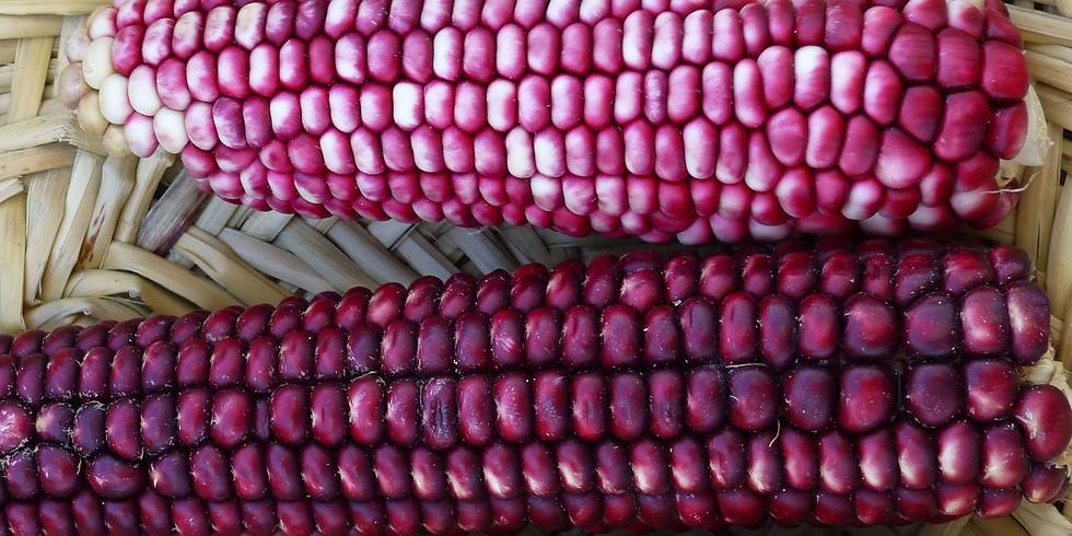 Indigenous Seed Stewardship Retreat