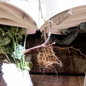 Livro dos Cheiros, 2011