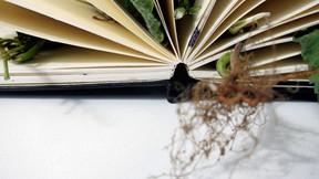 Livro de Cheiros (2011)