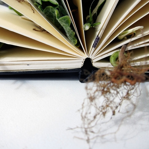 Book of Smells, 2011