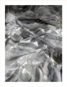 0178.Nest(e)scapes1255B, 2008