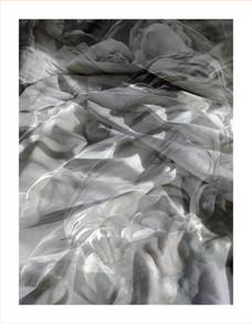 Nest(e)scapes.1255B, 2008