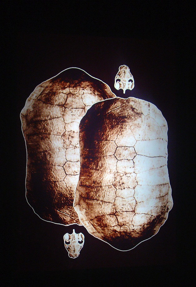 1454.carapaça iluminada, 2005