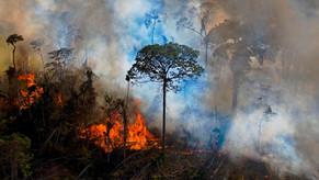 Carta da Amazonia, Nemonte Nenquino