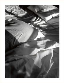 0178.Nest(e)scapes1221, 2008