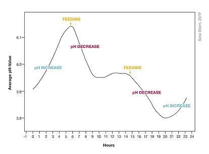 Average PH Value.png