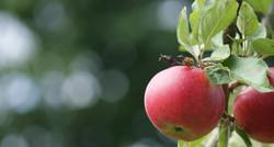 apple-2083078_1920_V2