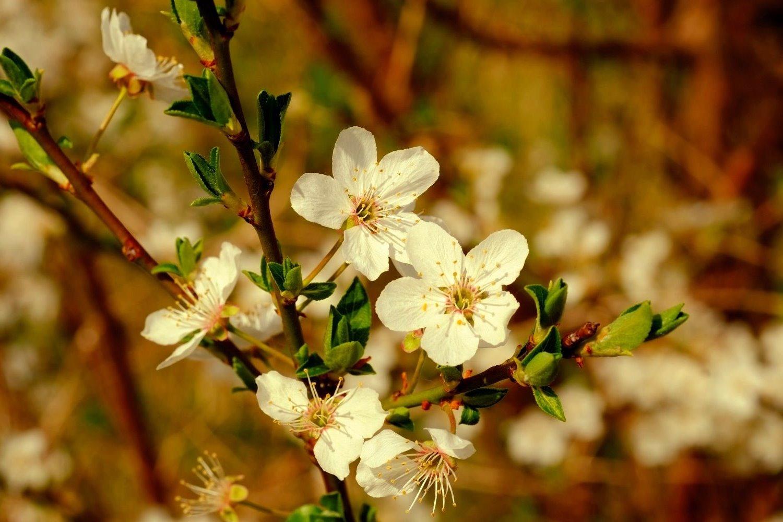 blossom-2197014_1920_edited_edited_edited
