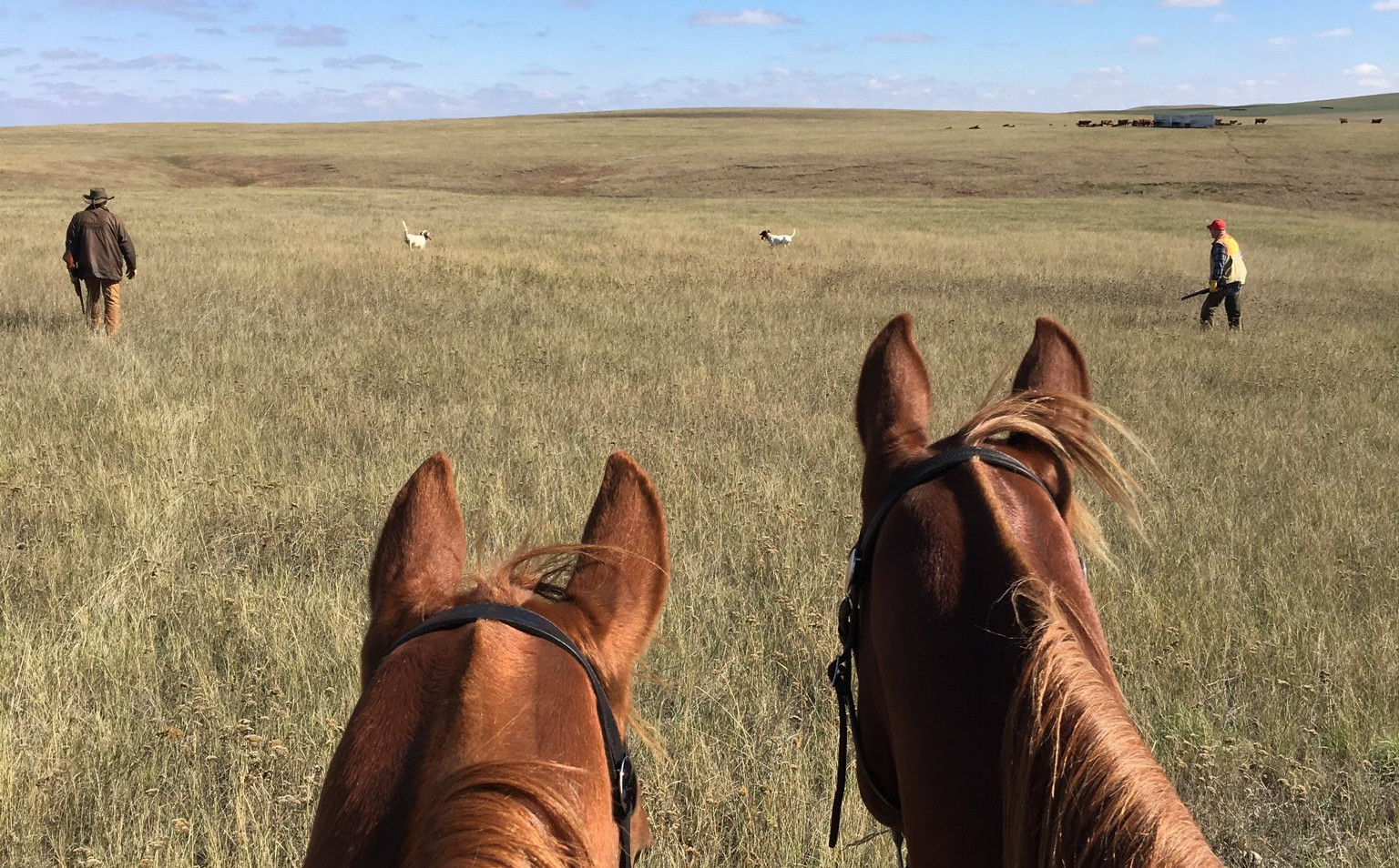 prairie chicken, sharp tail grouse, upland gamebird hunting, wingshootng, horseback hunting, english setter