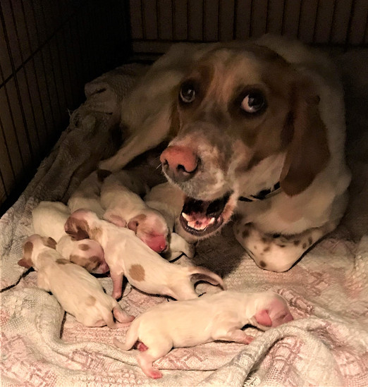 Emma and pups.jpeg