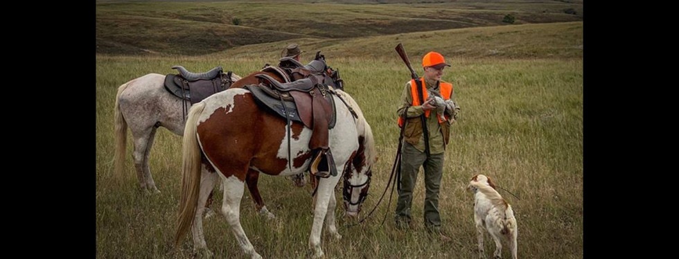 prairie chicken, sharp tail grouse, upland gamebird hunting, wingshootng, horseback hunting, english setter, Covey Rise
