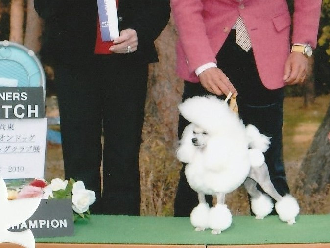 vogue line poodle