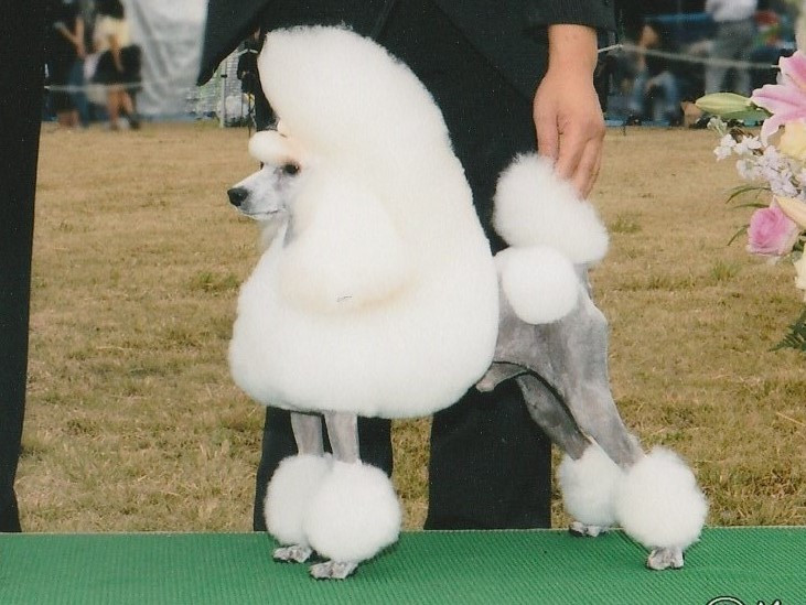 vogue line poodle ヴォーグライン