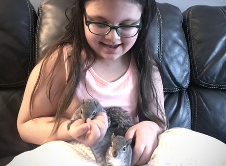 Orphaned Squirrel Care