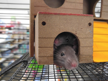 8 Things You Need To Do To Get Rid Of Mice