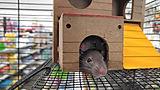 小さなネズミ