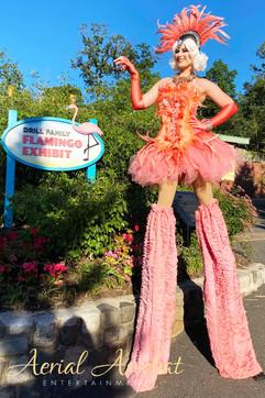 AAE Flamingo Stilt Walker IMG_7857.jpg