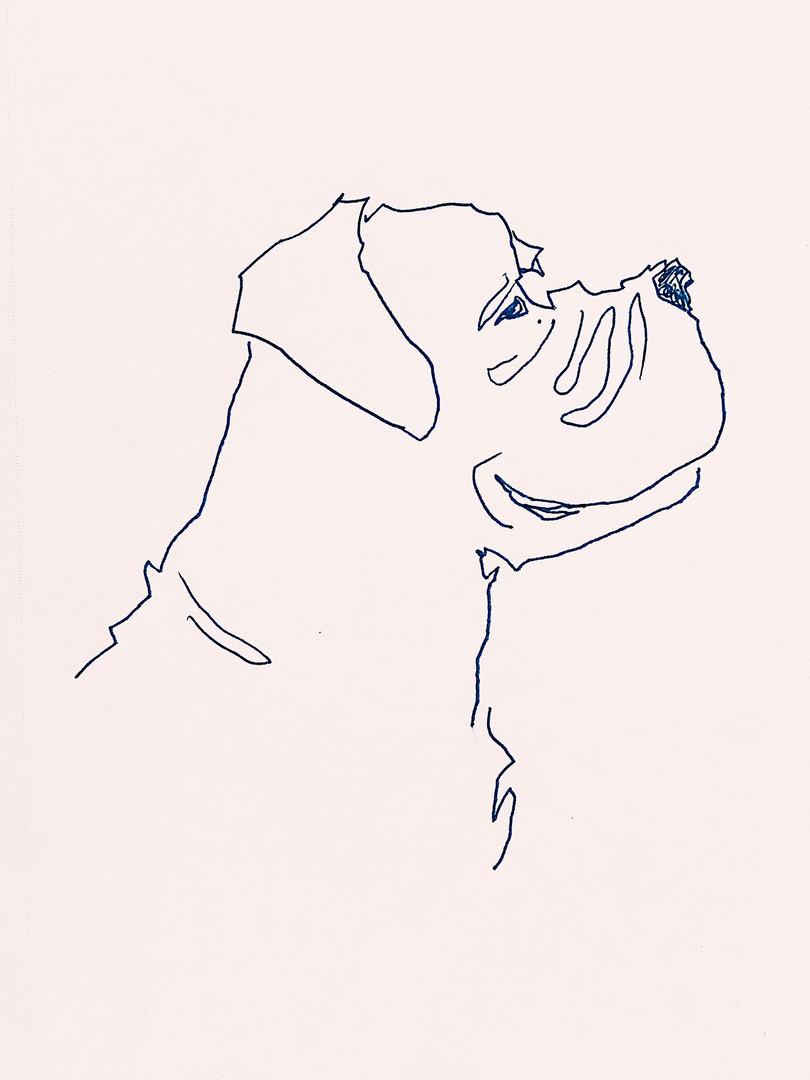 Bull Mastif.jpg
