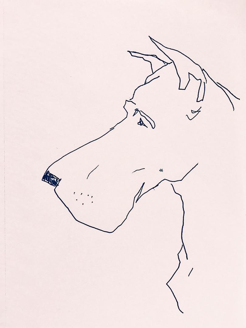 Great Dane Profile.jpg