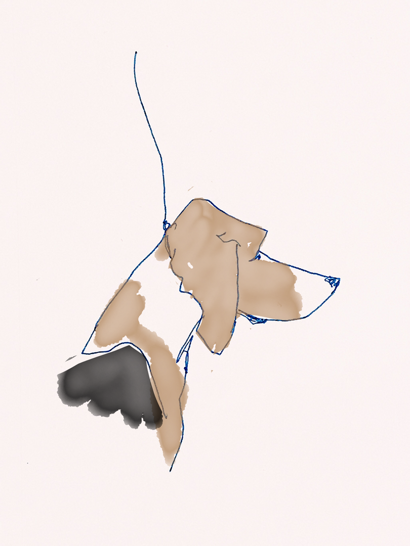 Beagle_colored.PNG