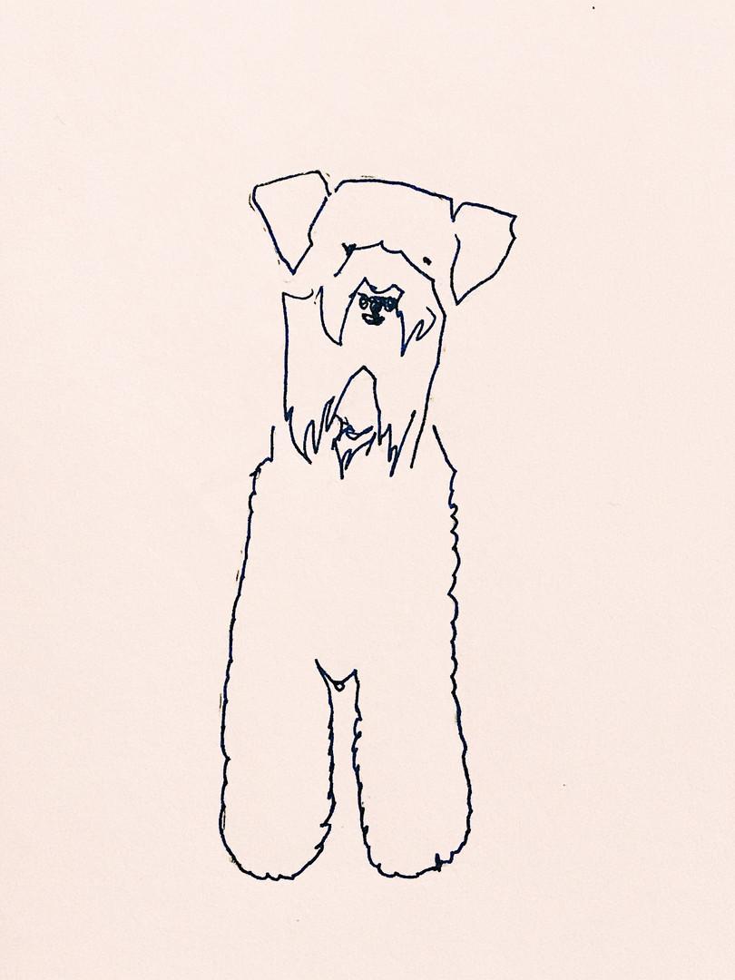 welsh_terrier.jpg