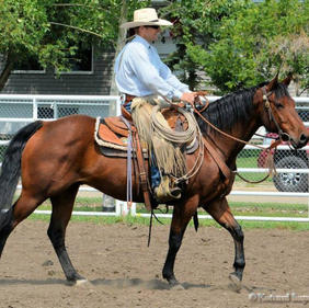 Sonny - AQHA by Prime Time Chex