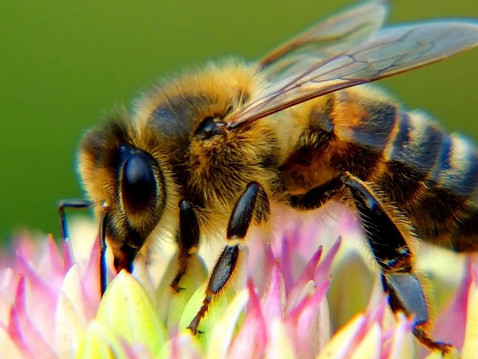 Why We Need Bees: How Honey Bees Benefit Our Health, Environment and More
