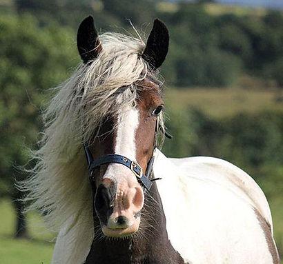 HORSE-Maddie1.jpg