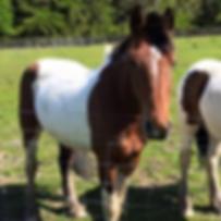 HORSE-BELLA.png