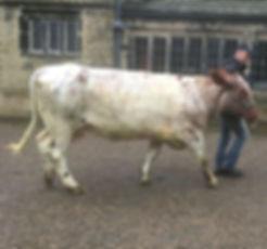 COWS-IMG_2579.jpg