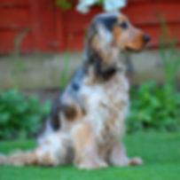 TroiAsti-DOG SHOOT NAMES FLR 753.jpg