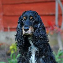 TroiAsti-DOG SHOOT NAMES FLR 858.jpg