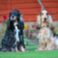 TroiAsti-DOG SHOOT NAMES FLR 833.jpg
